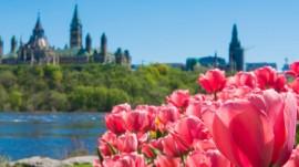 canadian-tulip-festival